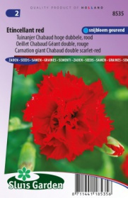 Carnation giant Chabaud double Etincellant, scarlet-red