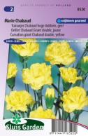 Carnation giant Chabaud double, yellow