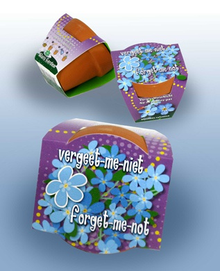 Terracotta Forget-me-not