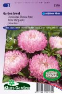 China aster Garden Jewel Rose