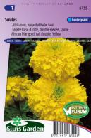 Marigold, African tall double Smiles (Yellow)